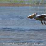 pelican water landing south africa